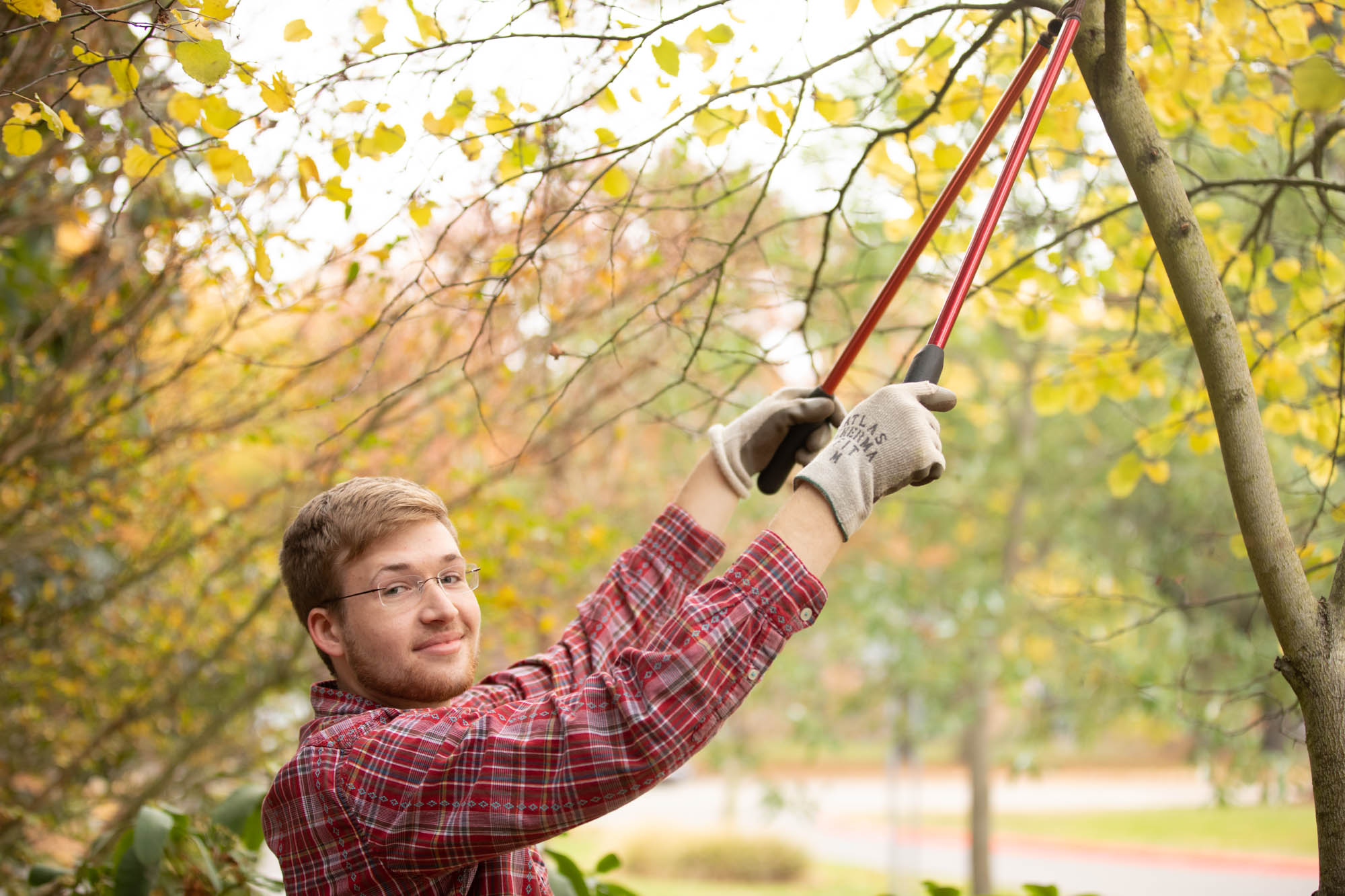 A student clipping tree branches