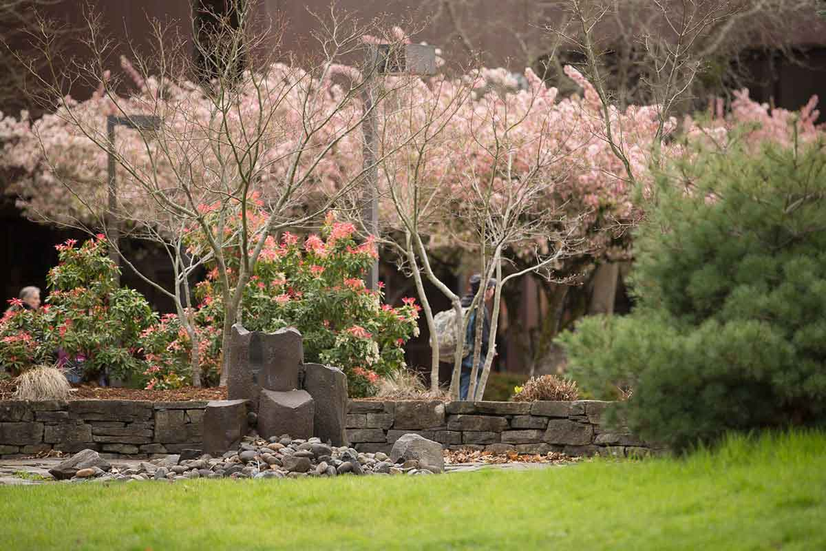 Landscaping with rocks, bushes, and trees shows springtime on campus